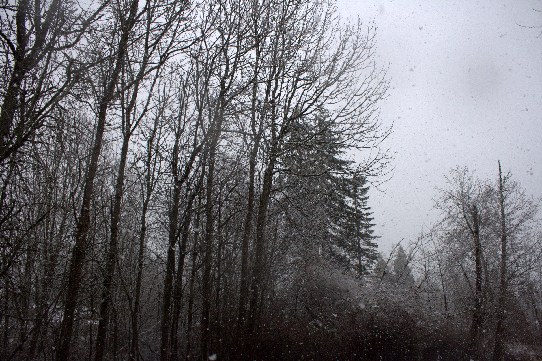 snow loading.jpg
