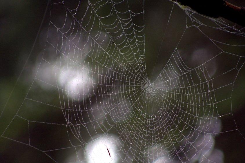 fogweb