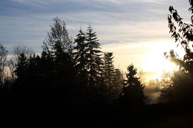 blackgull morning.JPG